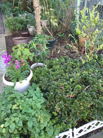 葛飾区 庭の整理